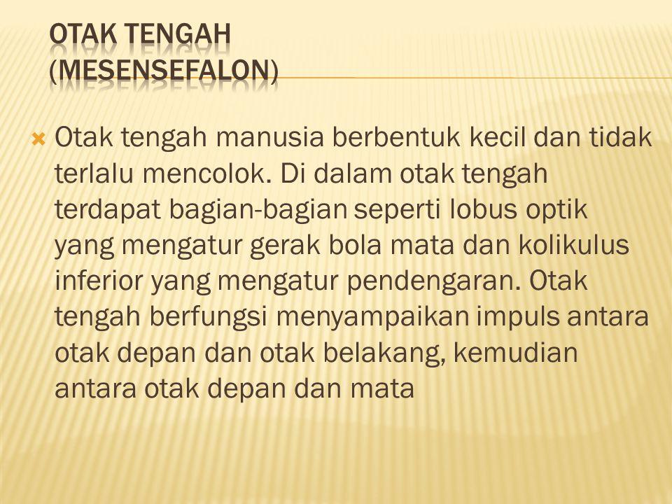 OTAK TENGAH (MESENSEFALON)
