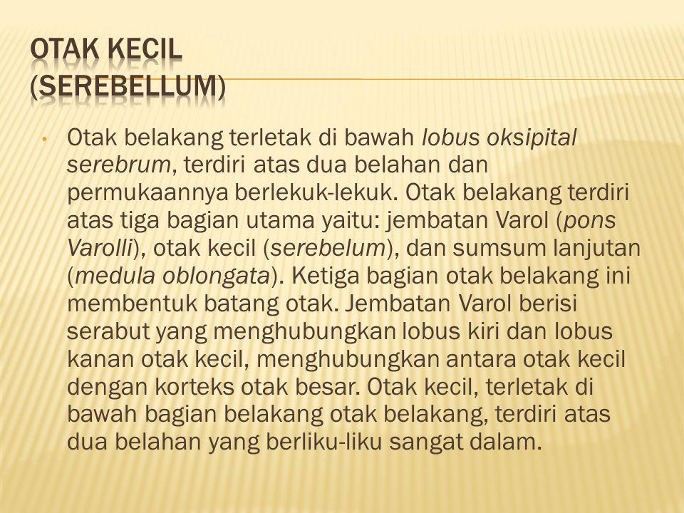 OTAK KECIL (SEREBELLUM)