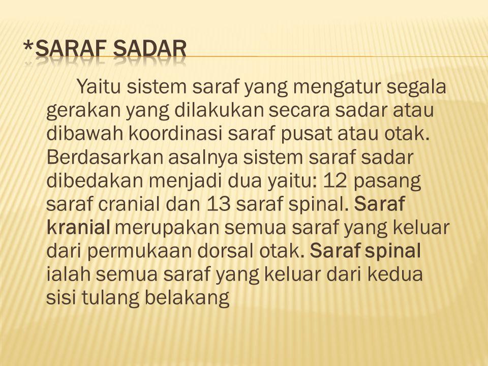*SARAF SADAR