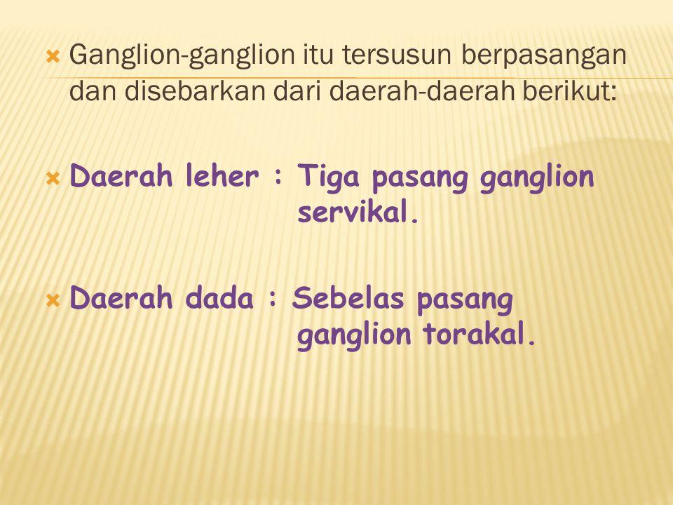 Ganglion-ganglion itu tersusun berpasangan dan disebarkan dari daerah-daerah berikut: