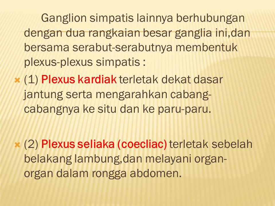 Ganglion simpatis lainnya berhubungan dengan dua rangkaian besar ganglia ini,dan bersama serabut-serabutnya membentuk plexus-plexus simpatis :
