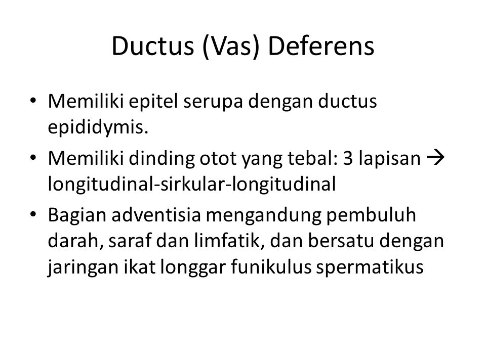 Ductus (Vas) Deferens Memiliki epitel serupa dengan ductus epididymis.