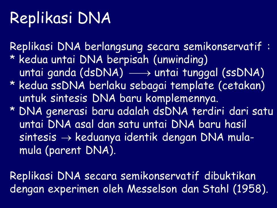 Replikasi DNA Replikasi DNA berlangsung secara semikonservatif :