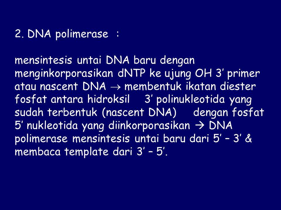 2. DNA polimerase :