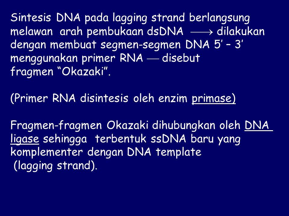 Sintesis DNA pada lagging strand berlangsung