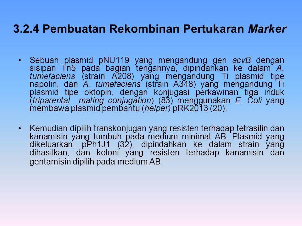 3.2.4 Pembuatan Rekombinan Pertukaran Marker
