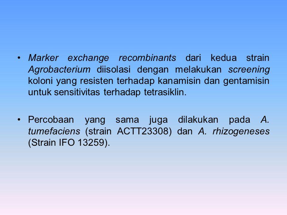 Marker exchange recombinants dari kedua strain Agrobacterium diisolasi dengan melakukan screening koloni yang resisten terhadap kanamisin dan gentamisin untuk sensitivitas terhadap tetrasiklin.