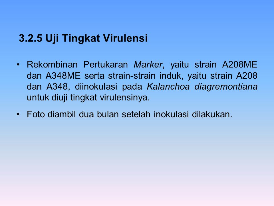 3.2.5 Uji Tingkat Virulensi