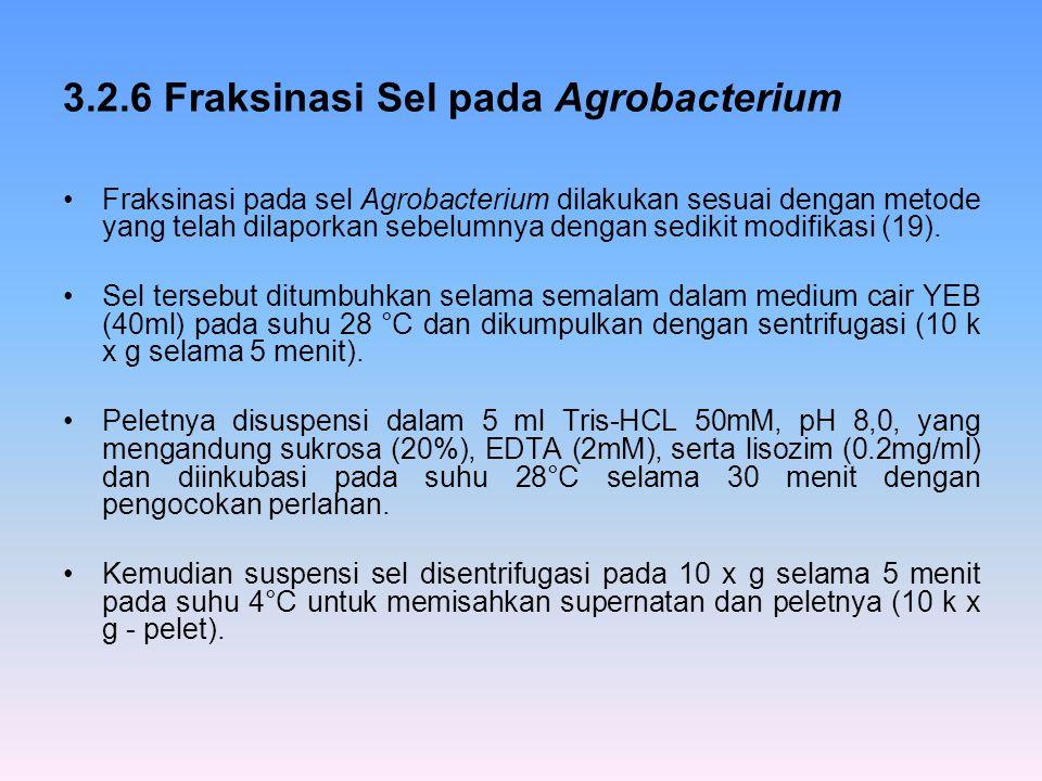 3.2.6 Fraksinasi Sel pada Agrobacterium