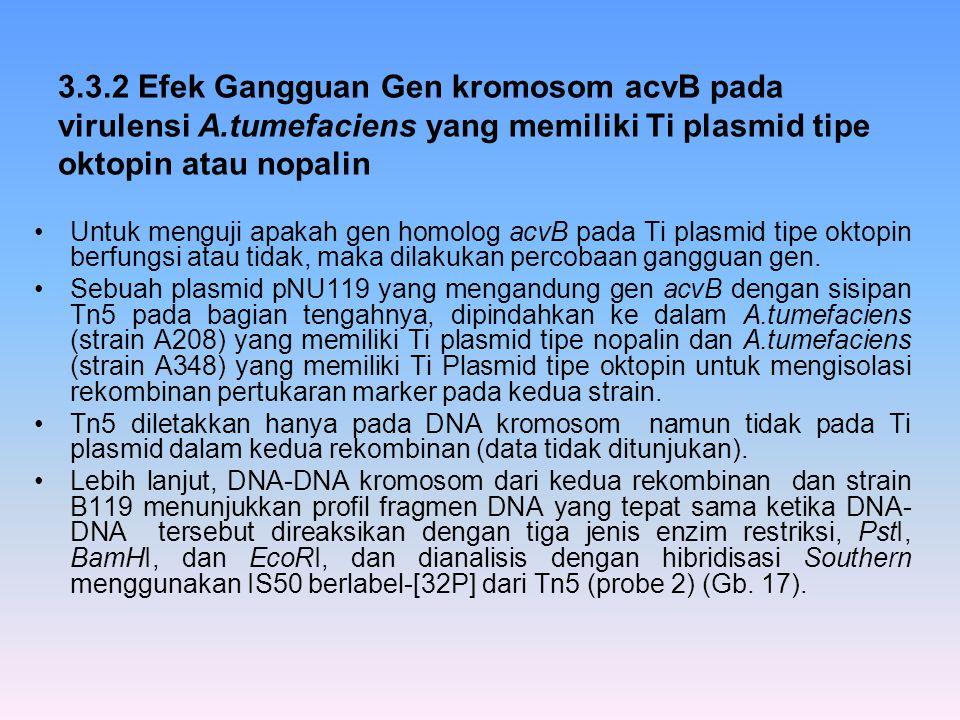 3. 3. 2 Efek Gangguan Gen kromosom acvB pada virulensi A