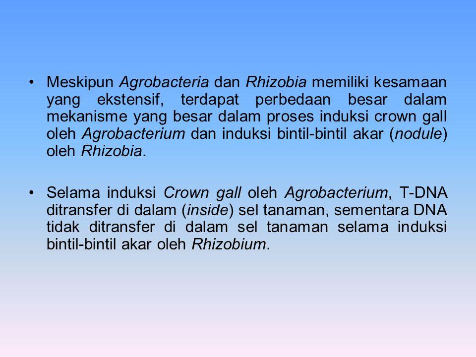 Meskipun Agrobacteria dan Rhizobia memiliki kesamaan yang ekstensif, terdapat perbedaan besar dalam mekanisme yang besar dalam proses induksi crown gall oleh Agrobacterium dan induksi bintil-bintil akar (nodule) oleh Rhizobia.