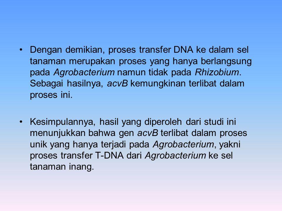 Dengan demikian, proses transfer DNA ke dalam sel tanaman merupakan proses yang hanya berlangsung pada Agrobacterium namun tidak pada Rhizobium. Sebagai hasilnya, acvB kemungkinan terlibat dalam proses ini.