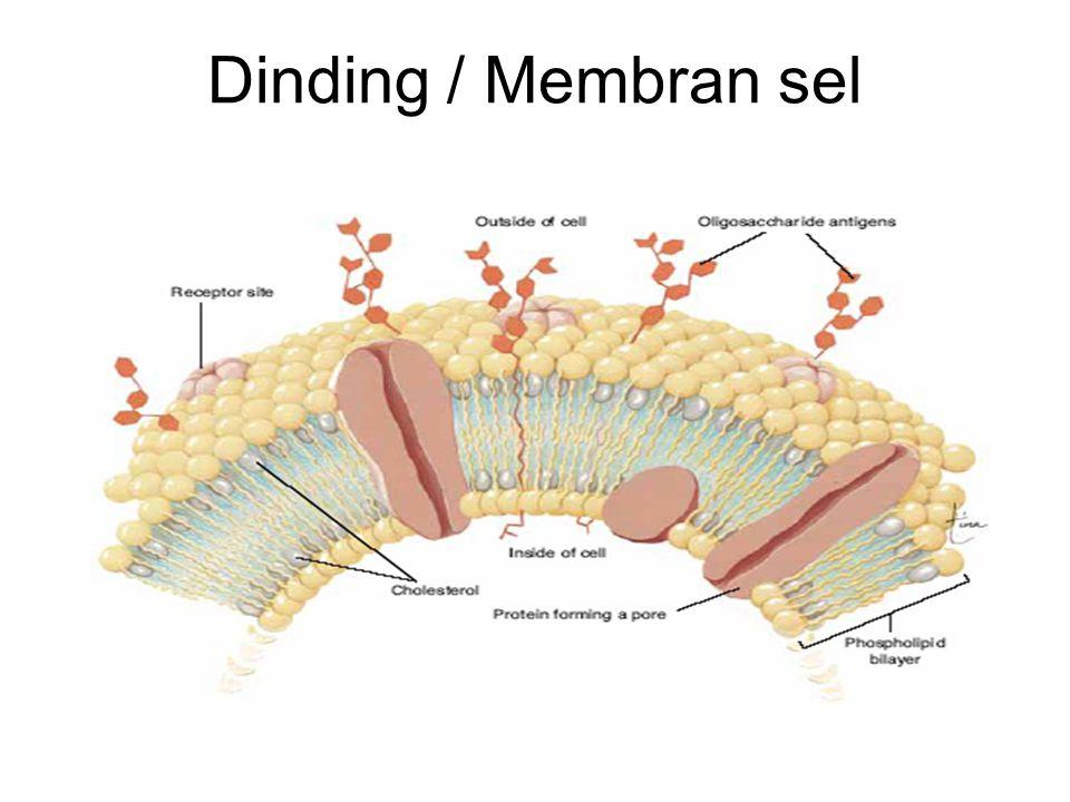 Dinding / Membran sel