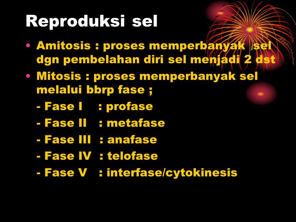 Reproduksi sel Amitosis : proses memperbanyak sel dgn pembelahan diri sel menjadi 2 dst. Mitosis : proses memperbanyak sel melalui bbrp fase ;