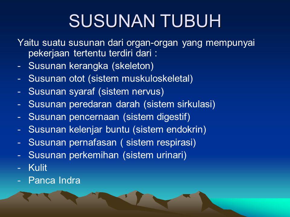 SUSUNAN TUBUH Yaitu suatu susunan dari organ-organ yang mempunyai pekerjaan tertentu terdiri dari :