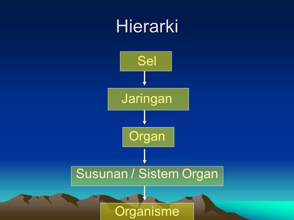 Hierarki Sel Jaringan Organ Susunan / Sistem Organ Organisme