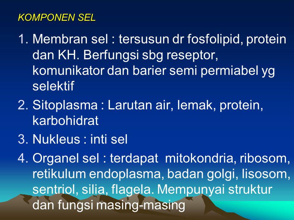 Sitoplasma : Larutan air, lemak, protein, karbohidrat