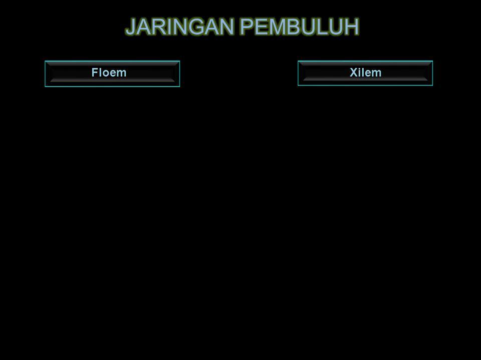 JARINGAN PEMBULUH Floem Xilem