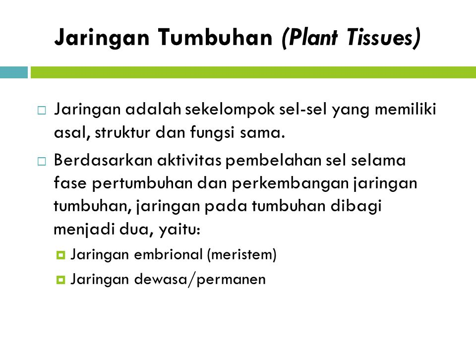 Jaringan Tumbuhan (Plant Tissues)