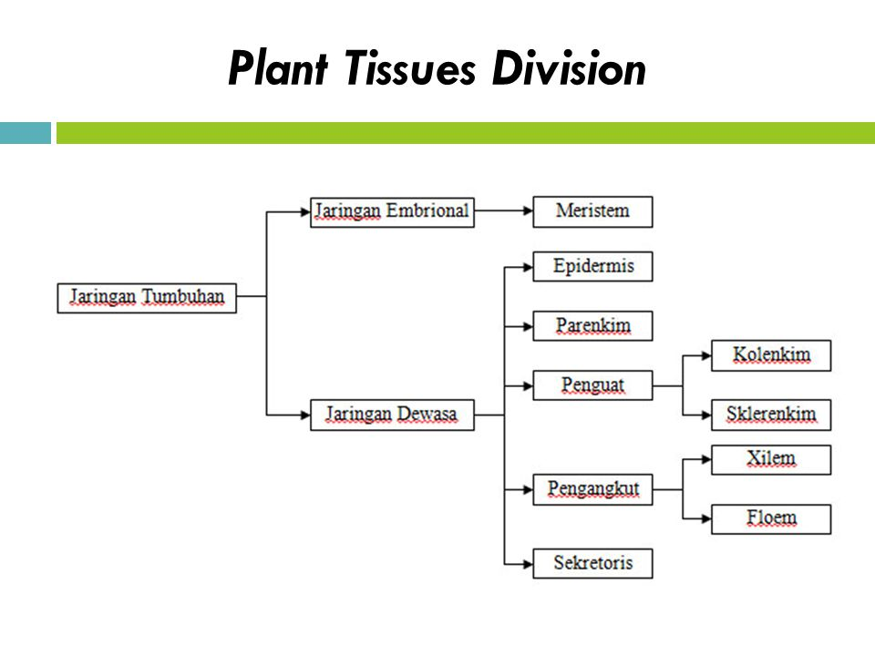 Plant Tissues Division