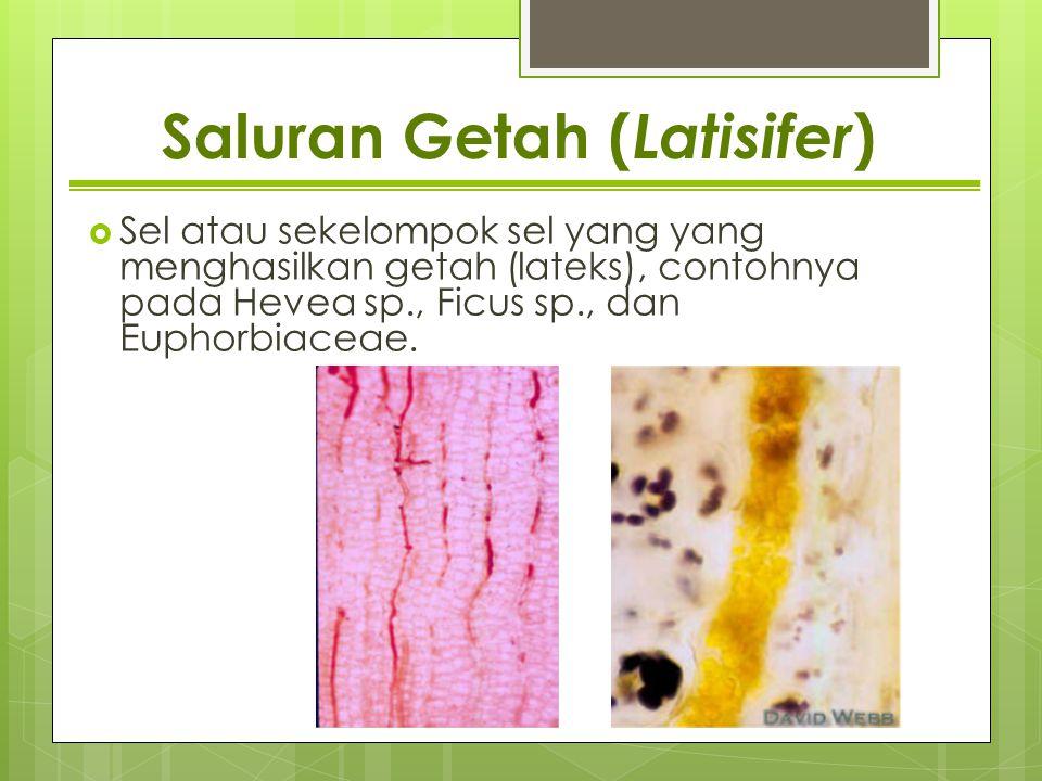 Saluran Getah (Latisifer)