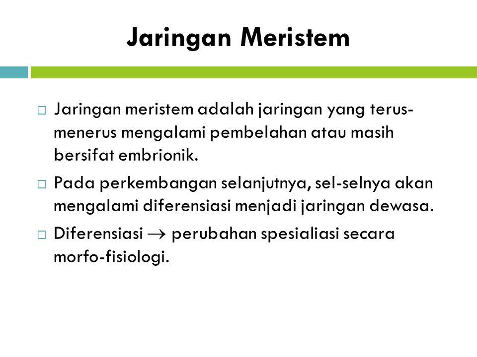 Jaringan Meristem Jaringan meristem adalah jaringan yang terus- menerus mengalami pembelahan atau masih bersifat embrionik.
