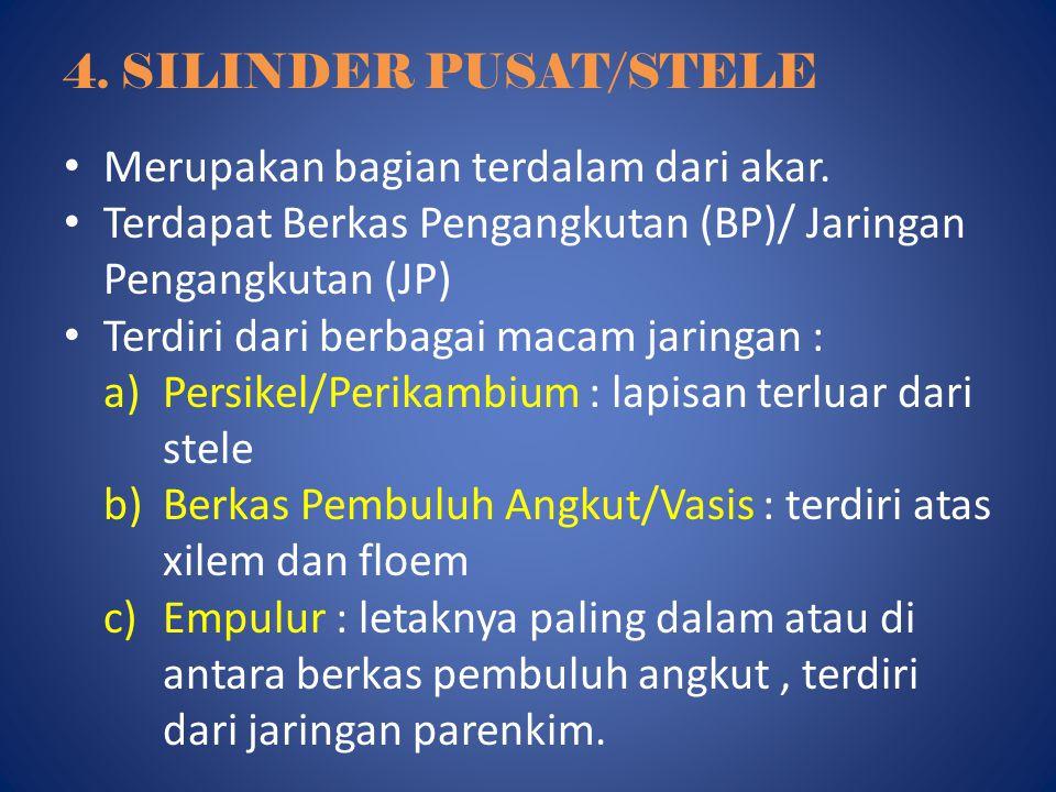 4. SILINDER PUSAT/STELE Merupakan bagian terdalam dari akar. Terdapat Berkas Pengangkutan (BP)/ Jaringan Pengangkutan (JP)