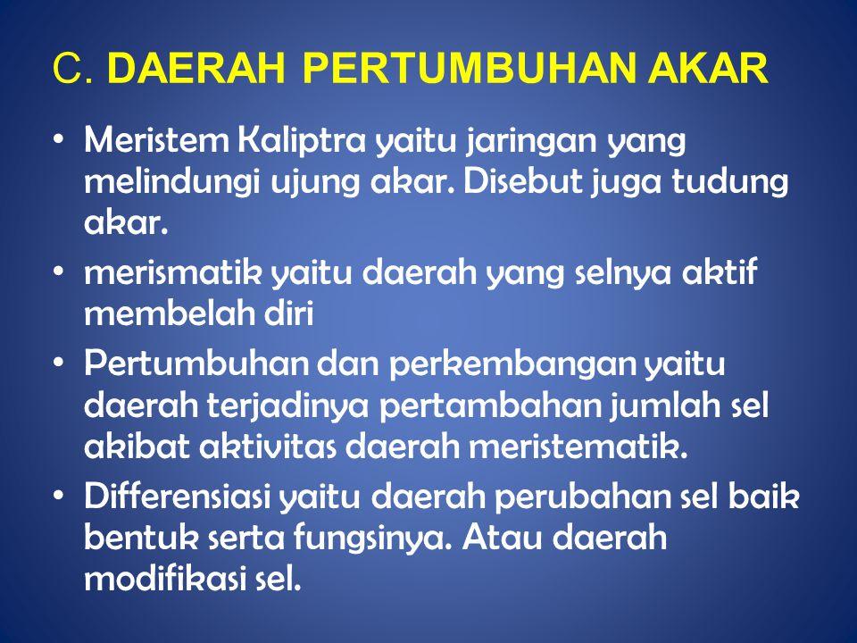 C. DAERAH PERTUMBUHAN AKAR