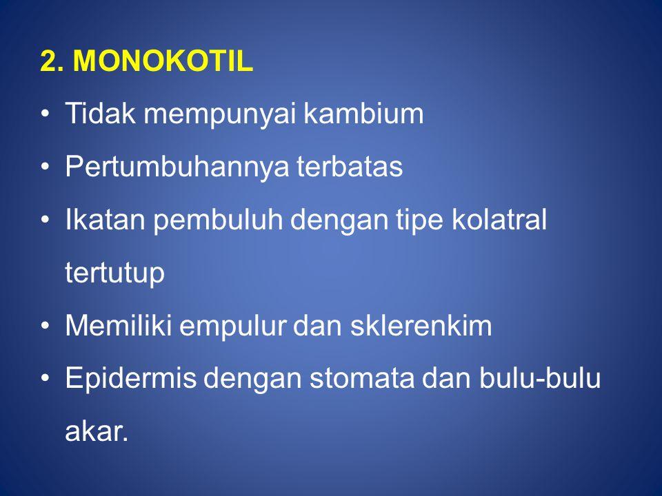 2. MONOKOTIL Tidak mempunyai kambium. Pertumbuhannya terbatas. Ikatan pembuluh dengan tipe kolatral tertutup.