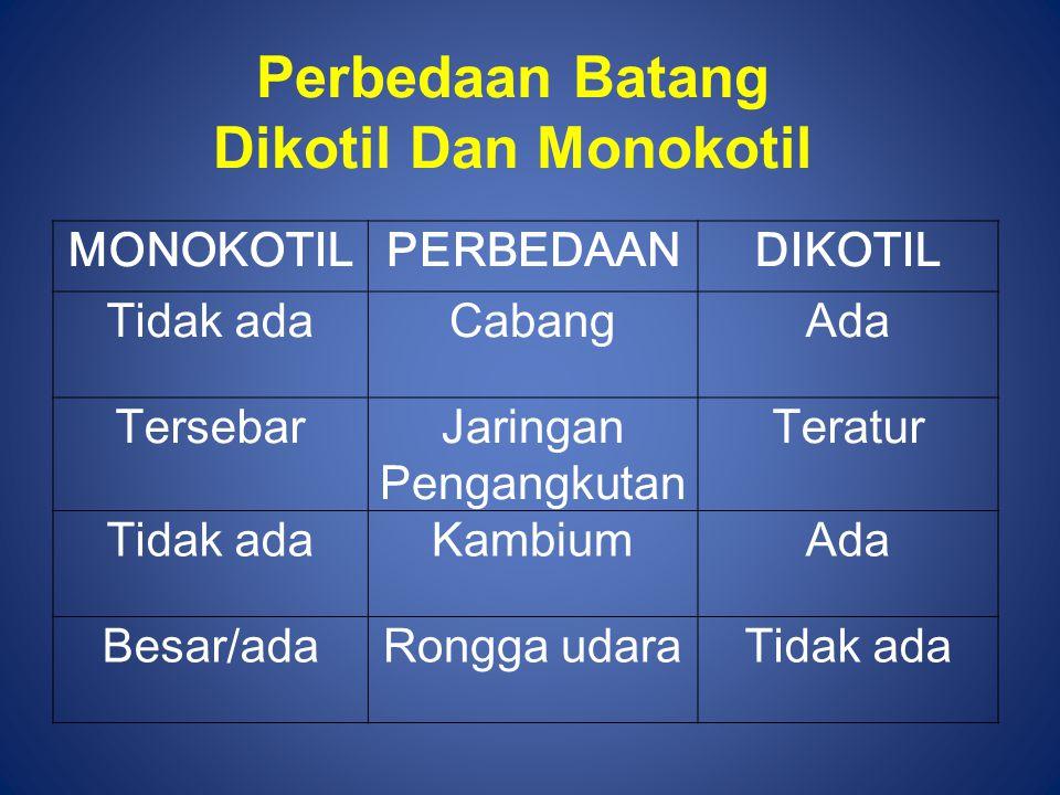 Perbedaan Batang Dikotil Dan Monokotil