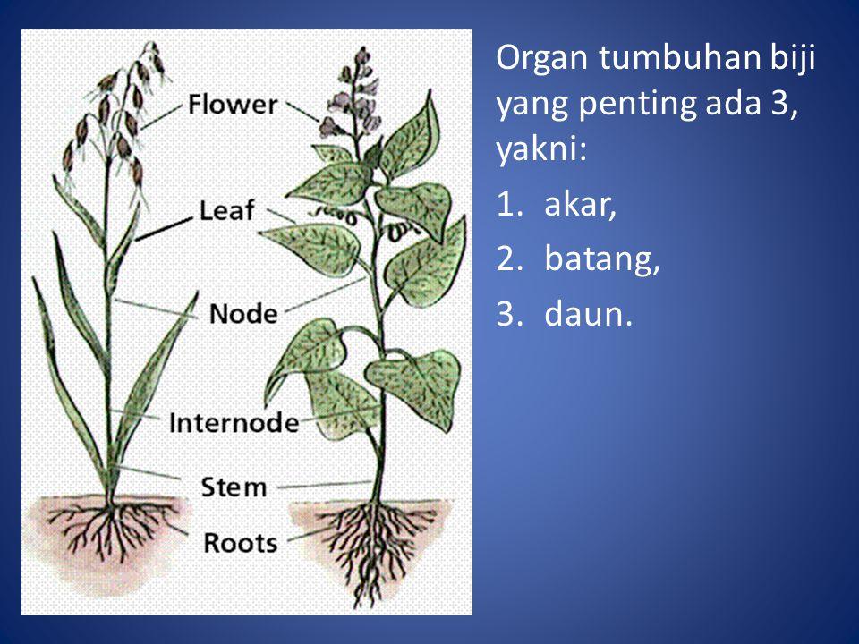 Organ tumbuhan biji yang penting ada 3, yakni: