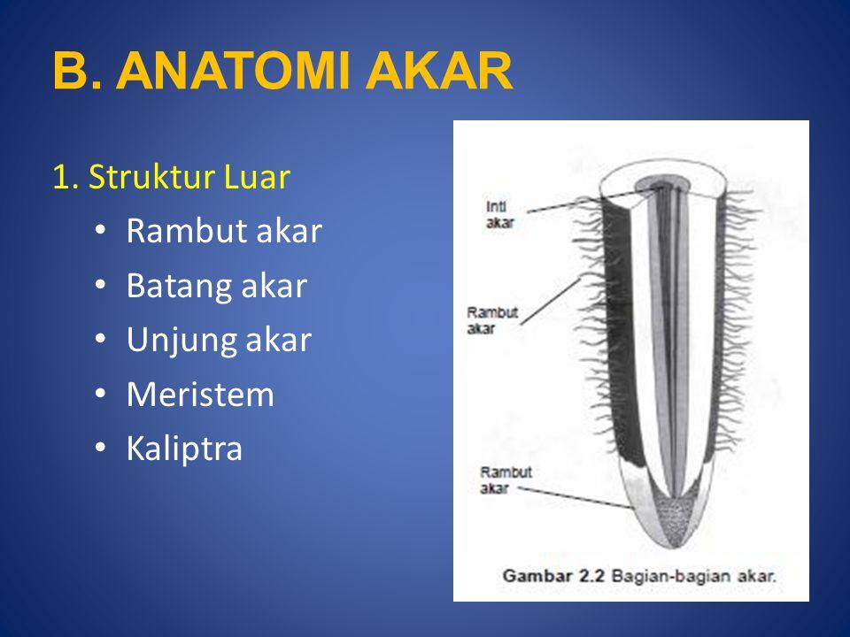 B. ANATOMI AKAR 1. Struktur Luar Rambut akar Batang akar Unjung akar