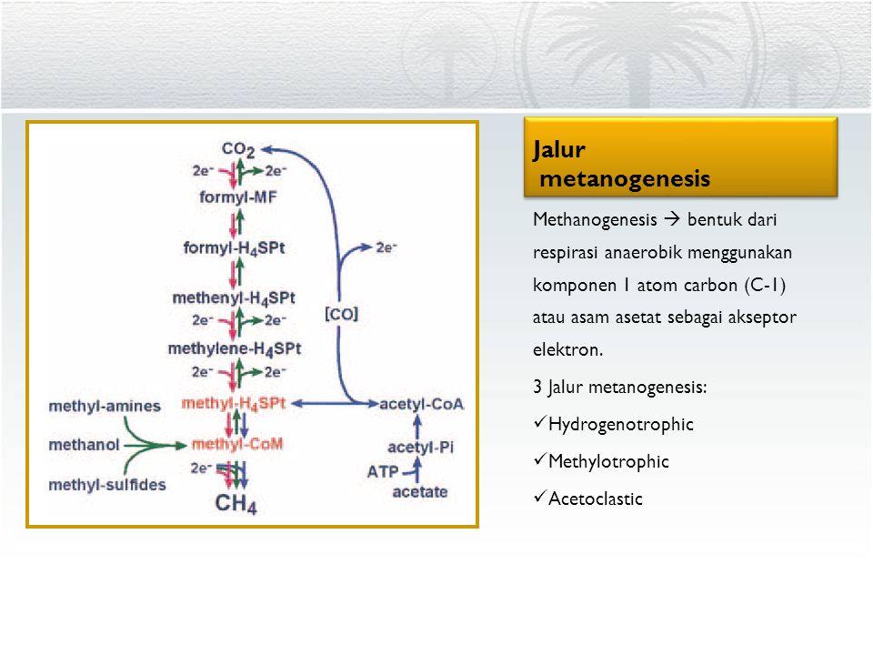 Jalur metanogenesis
