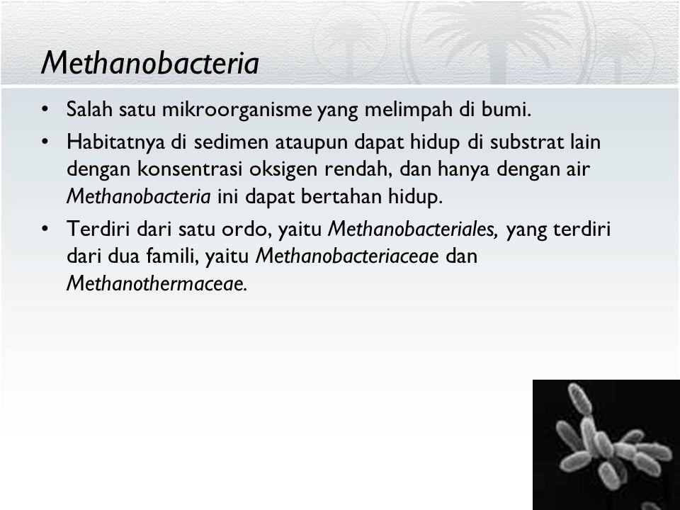 Methanobacteria Salah satu mikroorganisme yang melimpah di bumi.