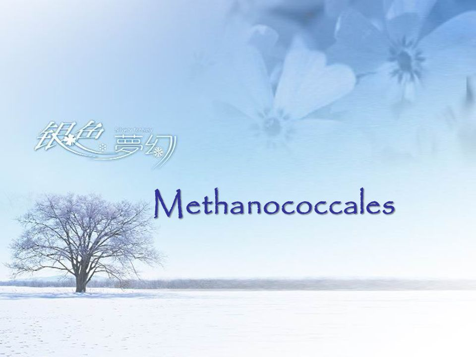 Methanococcales