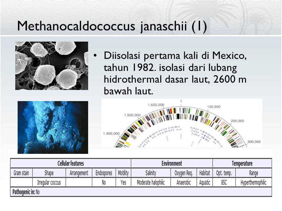 Methanocaldococcus janaschii (1)