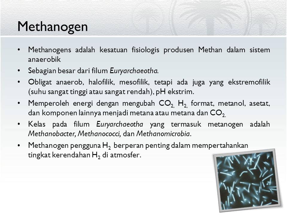 Methanogen Methanogens adalah kesatuan fisiologis produsen Methan dalam sistem anaerobik. Sebagian besar dari filum Euryarchaeotha.