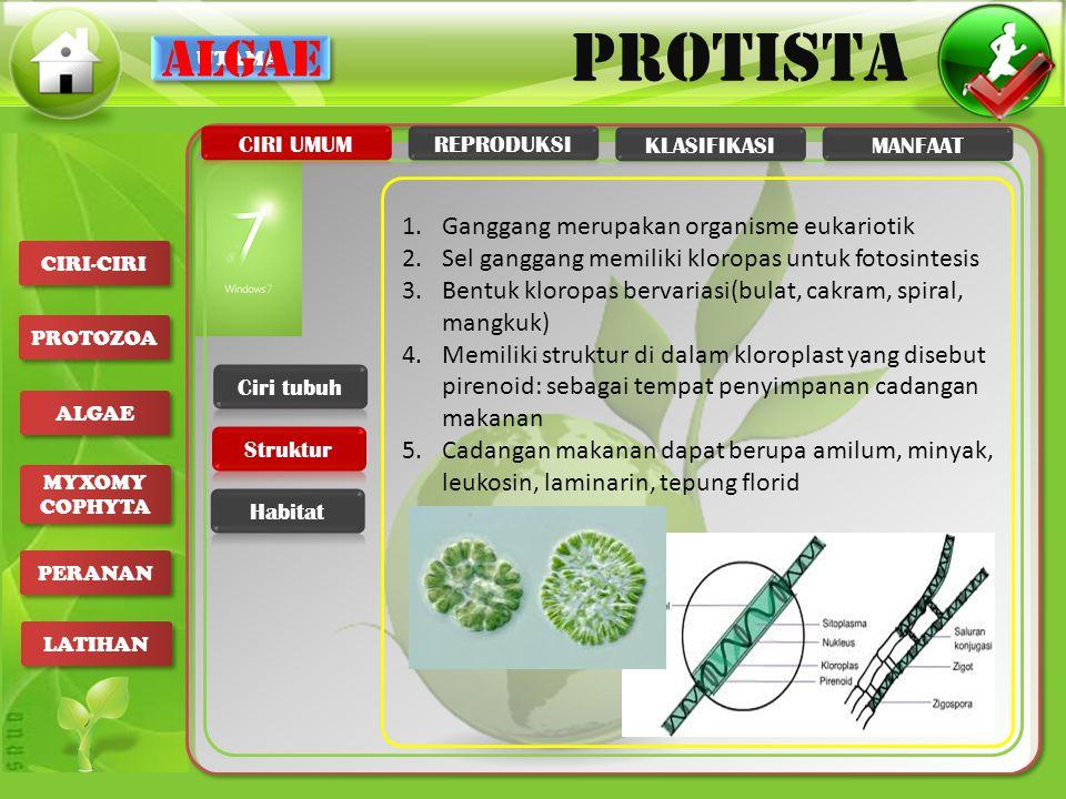algae Ganggang merupakan organisme eukariotik