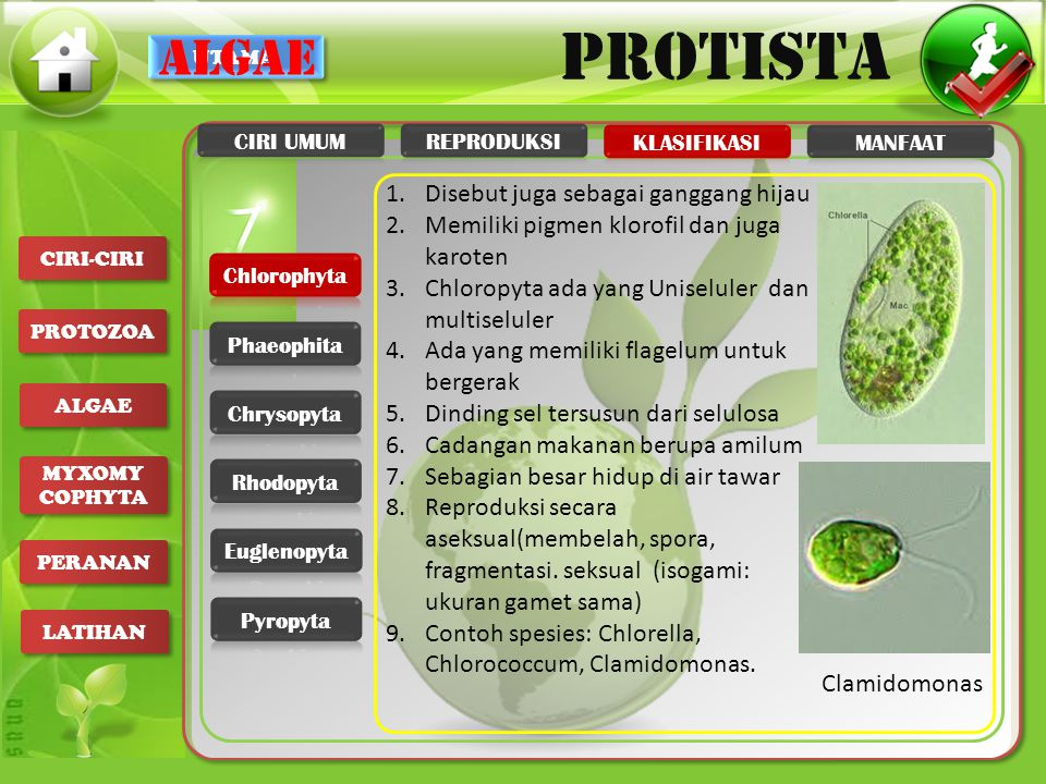 algae Disebut juga sebagai ganggang hijau