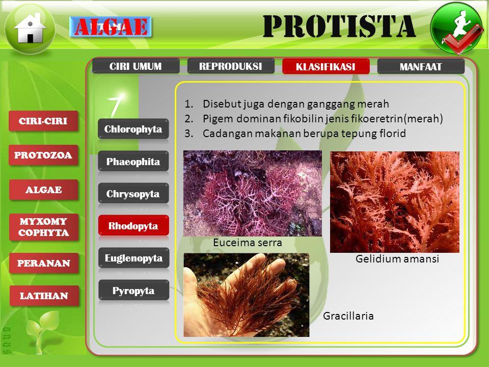 algae Disebut juga dengan ganggang merah