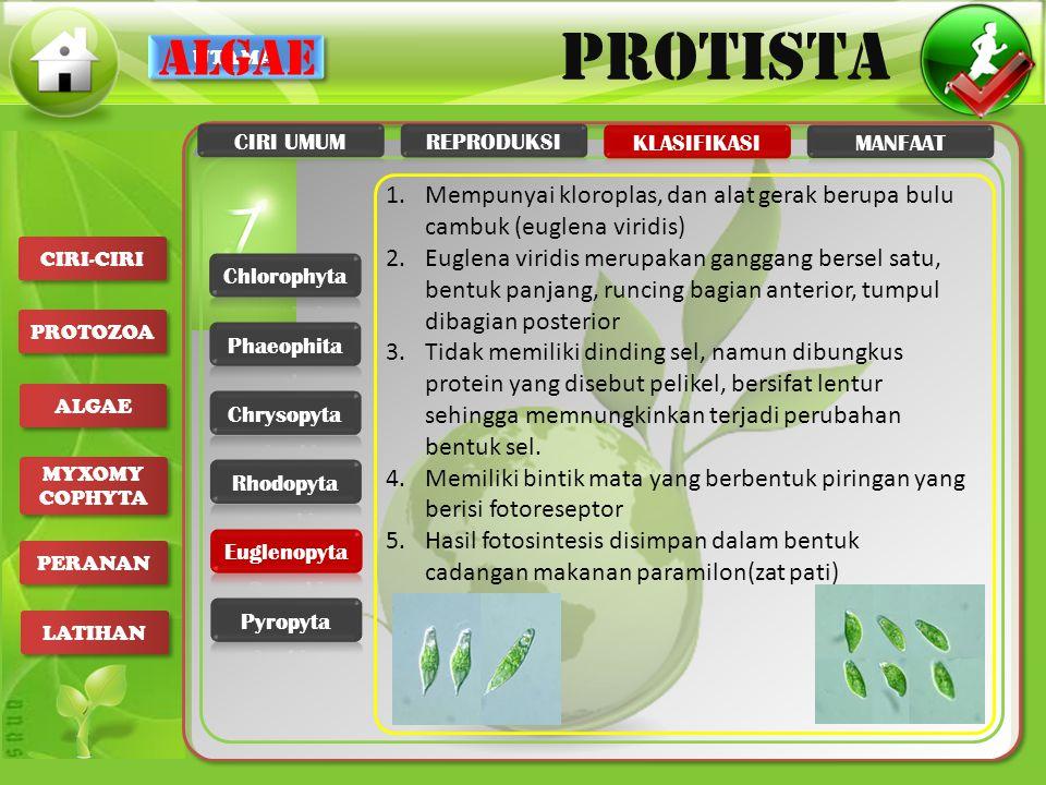 algae CIRI UMUM. REPRODUKSI. KLASIFIKASI. MANFAAT. Mempunyai kloroplas, dan alat gerak berupa bulu cambuk (euglena viridis)