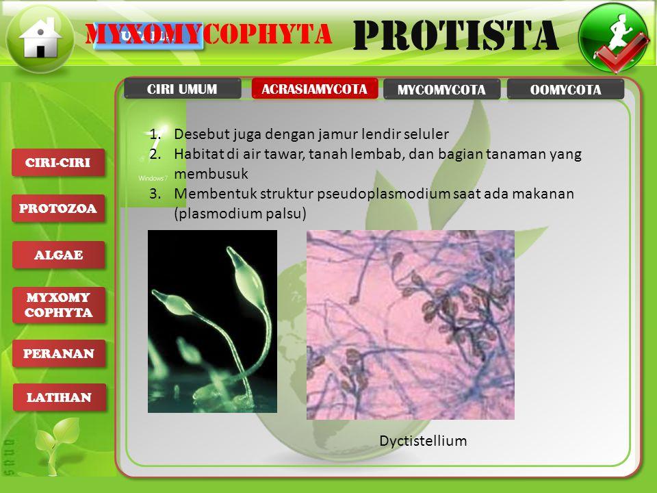 myxomycophyta Desebut juga dengan jamur lendir seluler