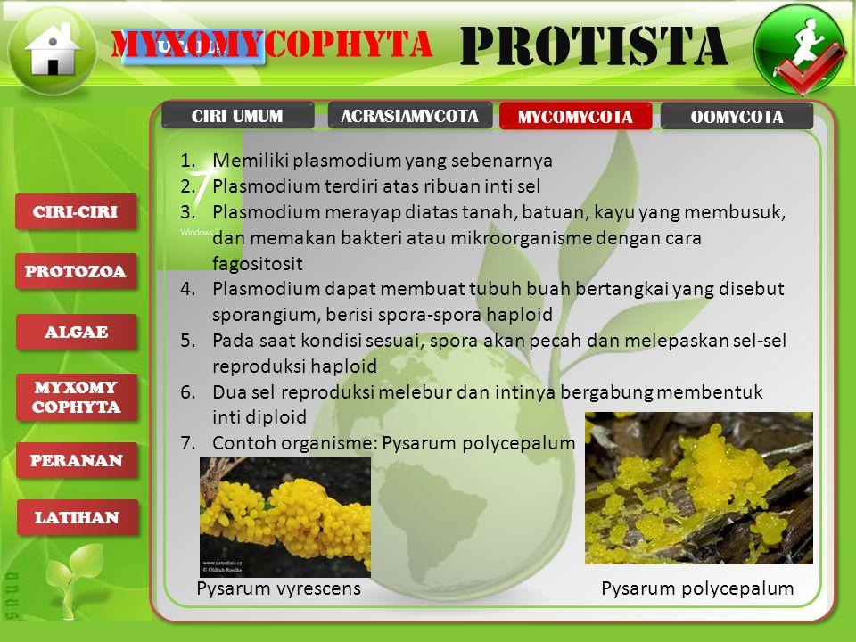 myxomycophyta Memiliki plasmodium yang sebenarnya