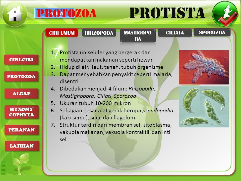 PROTOZOA CIRI UMUM. RHIZOPODA. MASTIGOPORA. CILIATA. SPOROZOA. Protista uniseluler yang bergerak dan mendapatkan makanan seperti hewan.