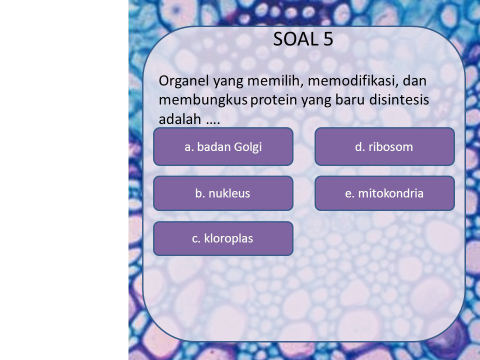 SOAL 5 Organel yang memilih, memodifikasi, dan membungkus protein yang baru disintesis adalah …. a. badan Golgi.