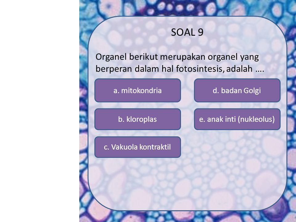 e. anak inti (nukleolus)