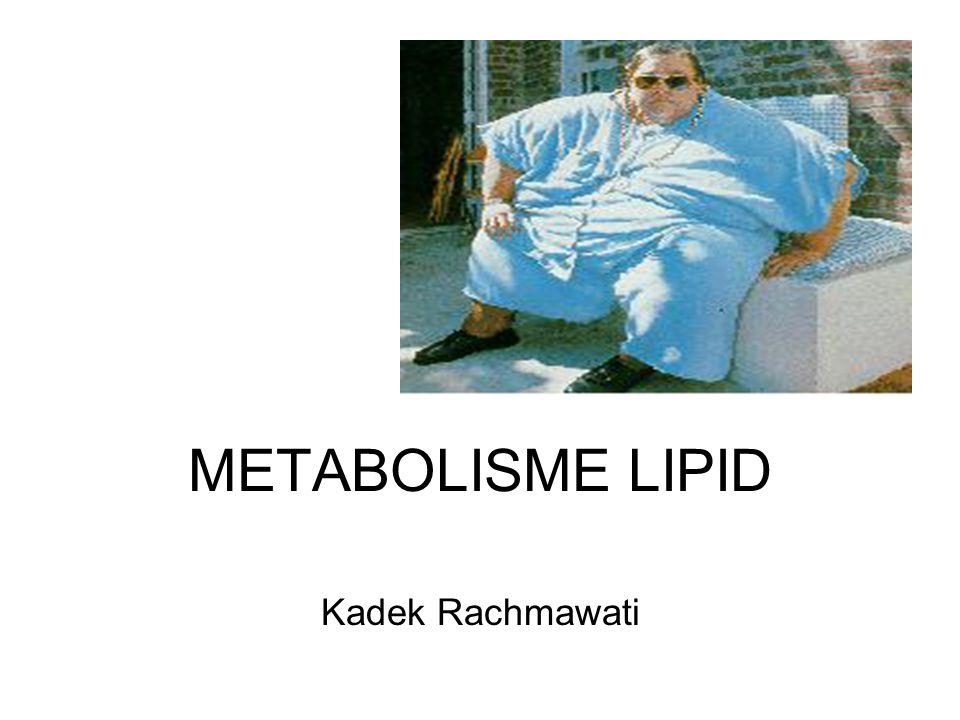 METABOLISME LIPID Kadek Rachmawati