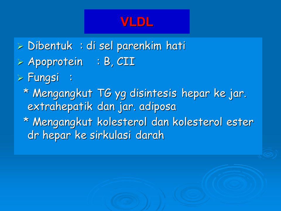 VLDL Dibentuk : di sel parenkim hati Apoprotein : B, CII Fungsi :
