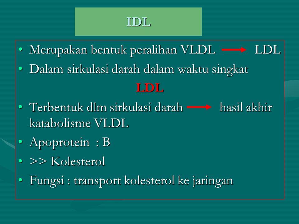 IDL Merupakan bentuk peralihan VLDL LDL. Dalam sirkulasi darah dalam waktu singkat. LDL.