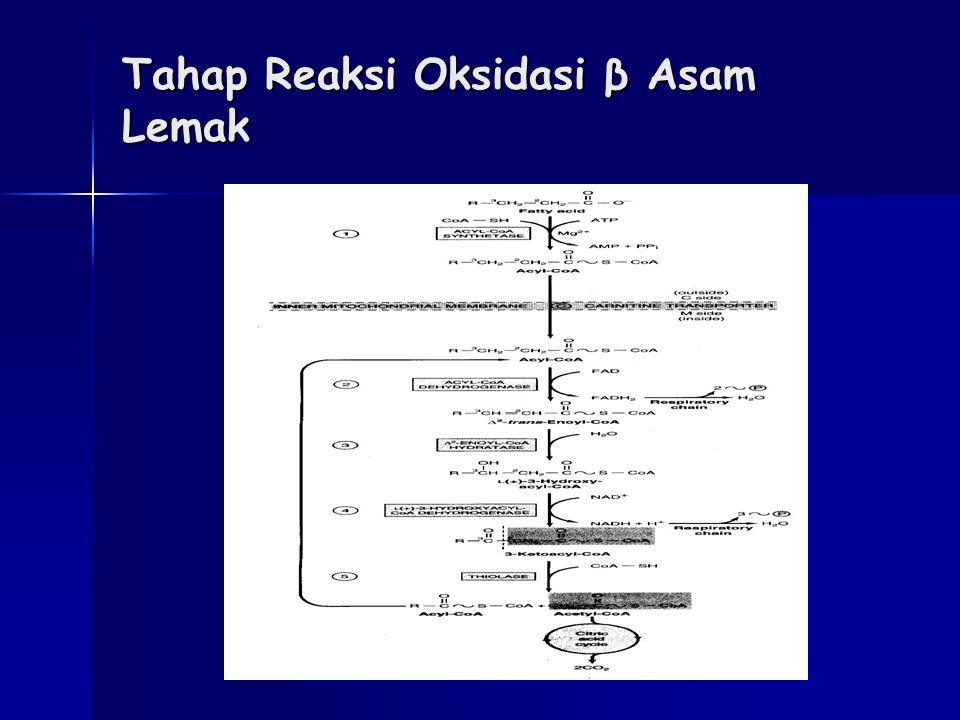 Tahap Reaksi Oksidasi β Asam Lemak